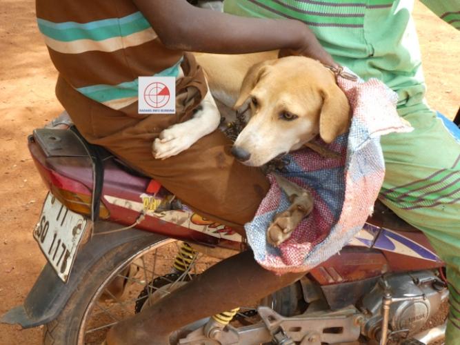 Morsures de chien à Ouagadougou : 894 cas en 2018 et 186 au ...